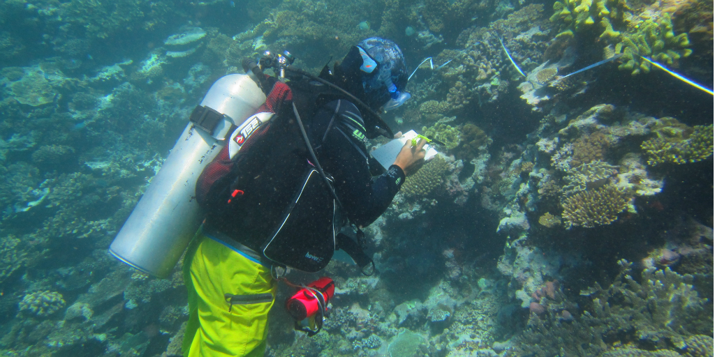 A diver doing an underwater survey of a coral reef off the coast of Dawasamu, Fiji.