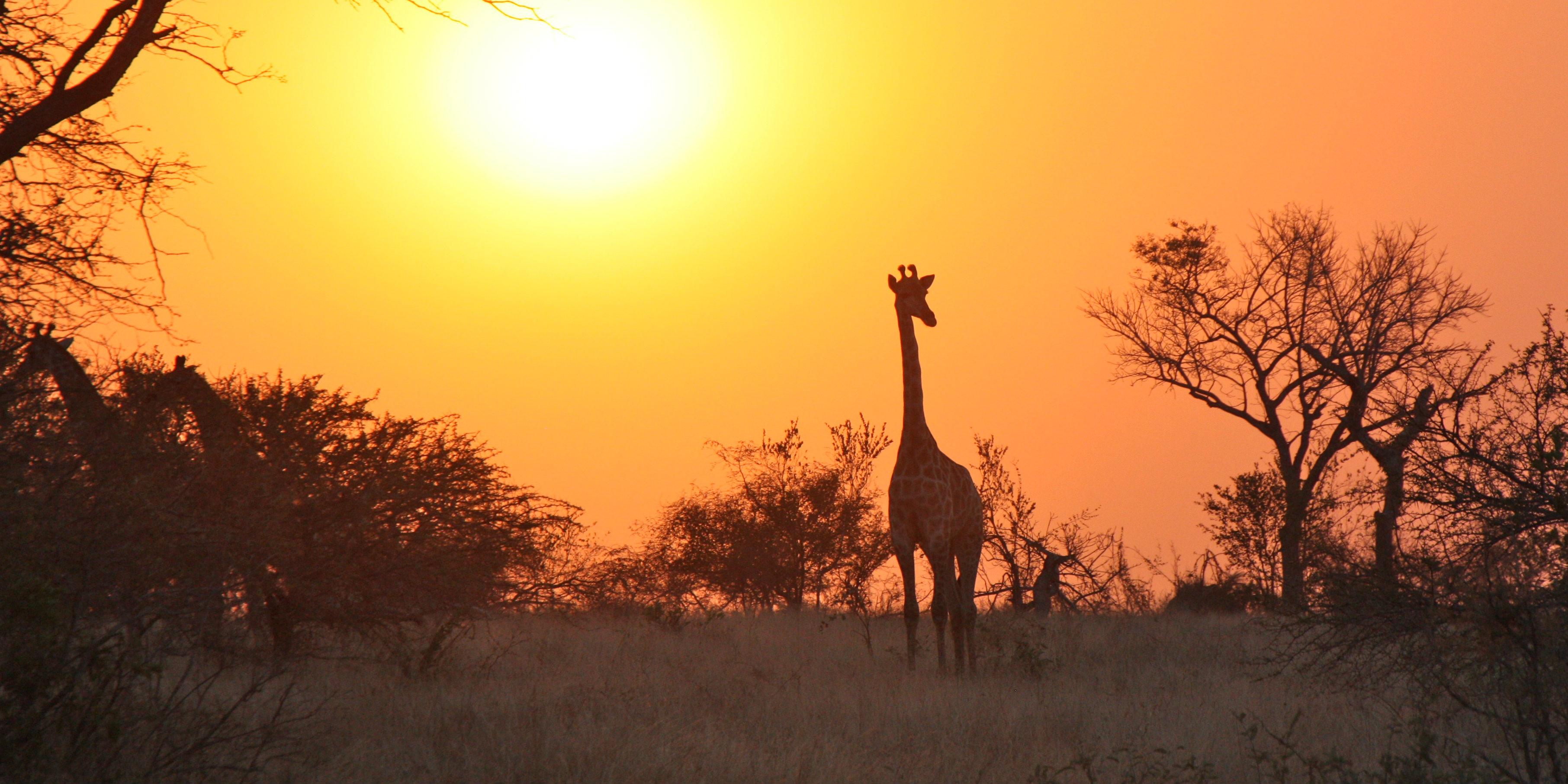 zambia safari