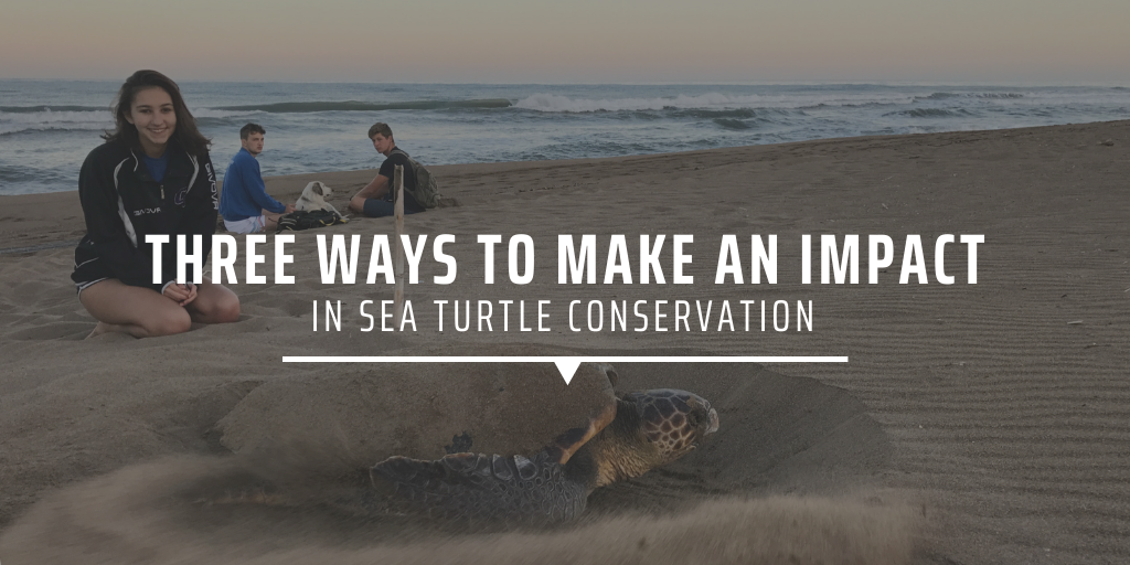 Three ways to make an impact in sea turtle conservation